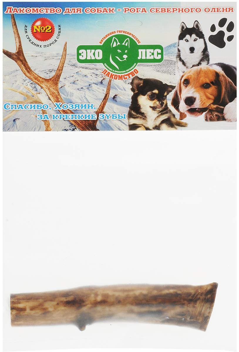 Лакомство для собак Эколес Рога Оленей №2, 80 г62944Рога оленя - это замечательная альтернатива привычным косточкам и деревянным палкам, они идеально подходят для ежедневного жевания и помогают быстро отучить собаку от порчи мебели и предметов интерьера. К тому же в отличие от костей, кожи, свиных ушей и прочих популярных лакомств, рога не имеют запаха, они чистые и не липкие. Потому даже если собака будет грызть их в комнате, она не испачкает и не повредит мебель или ковры.Одно из главных преимуществ подобного лакомства заключается в его особой пористой структуре. Рог оленя внутри не цельный, а пронизанный множеством бороздок от отмерших кровеносных сосудов, которые делают текстуру более хрупкой и комфортной для разгрызания. Кусочки легко откусываются, не портят зубы и десны, а благодаря своей структуре не травмируют пищевод и легко перевариваются. Благодаря такой особенности рога можно давать даже маленьким щенкам еще до начала смены зубов - Ваш любимец гарантировано получит от угощения только пользу и удовольствие.