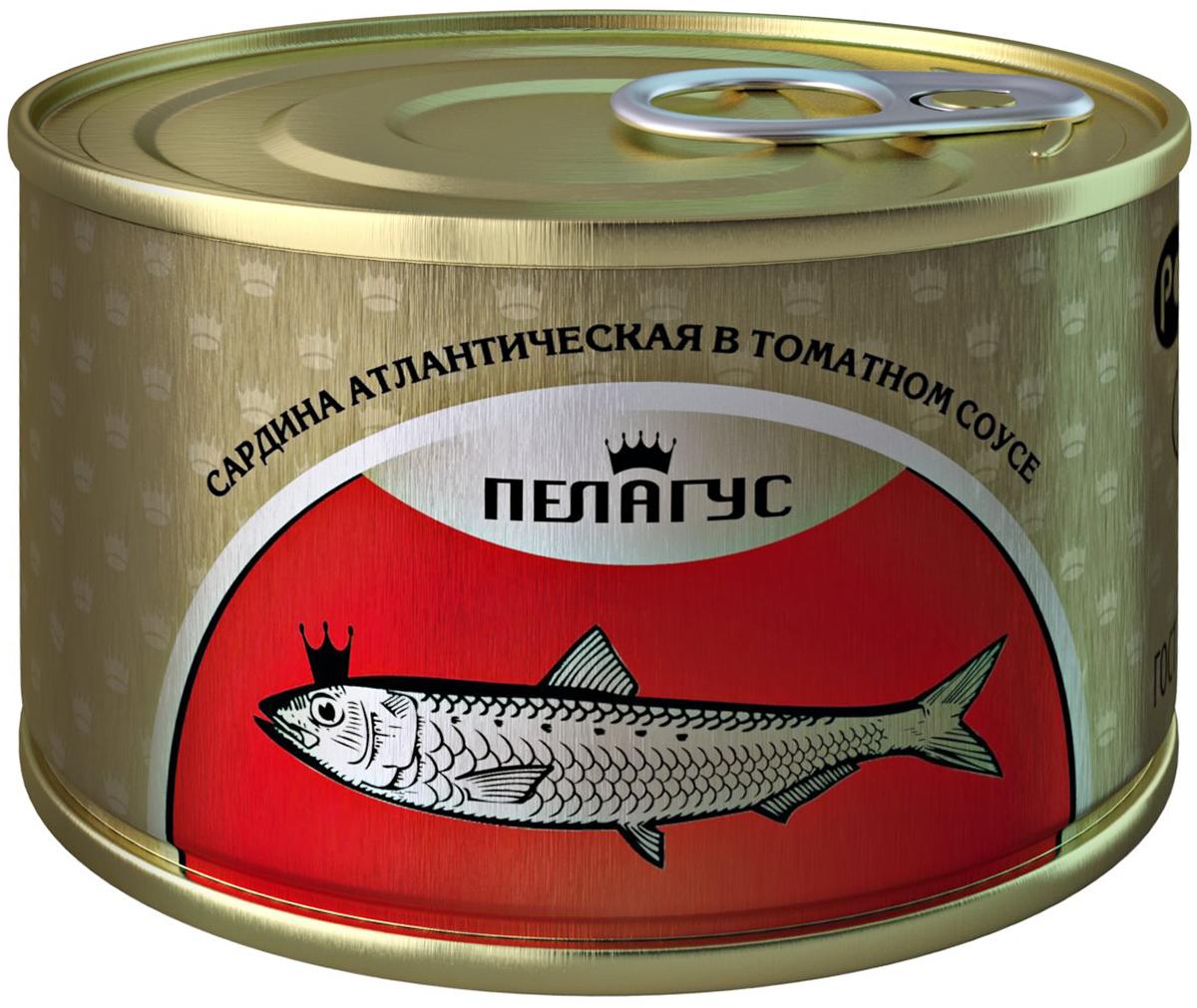 Пелагус сардина атлантическая в томатном соусе, 230 г4627098460057
