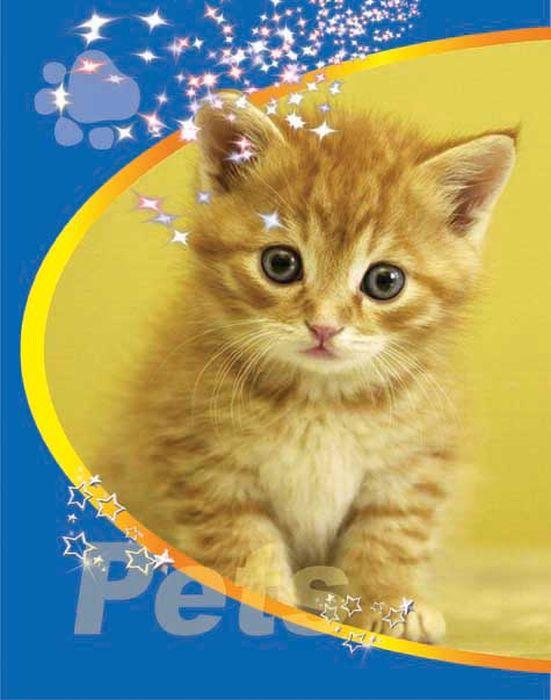 Тетрадь Pets Кот Рыж 48 листов цвет синий08-1201Тетрадь 48 л. кл. на гребне Pets Кот рыж ТП-2-6