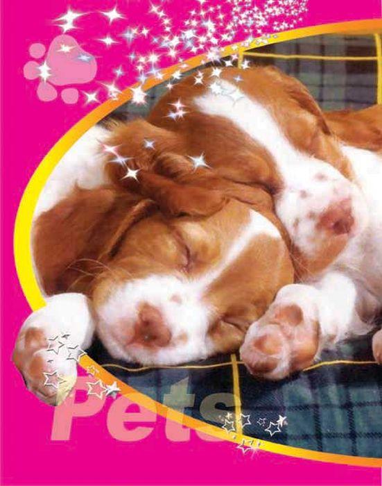 Тетрадь Pets Два щенка 48 листов цвет розовый лайки щенка белая церковъ