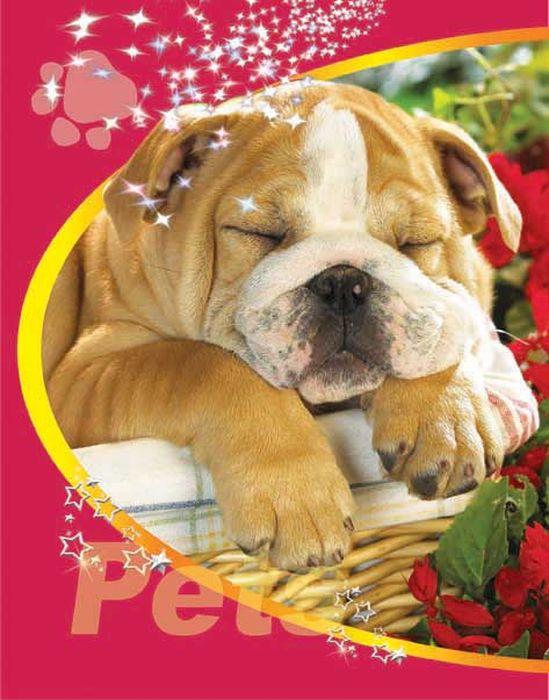 Тетрадь Pets Щенок 48 листов цвет коричнево-красный08-1204Тетрадь 48 л. кл. на гребне Pets Щенок в к ТП-2-2