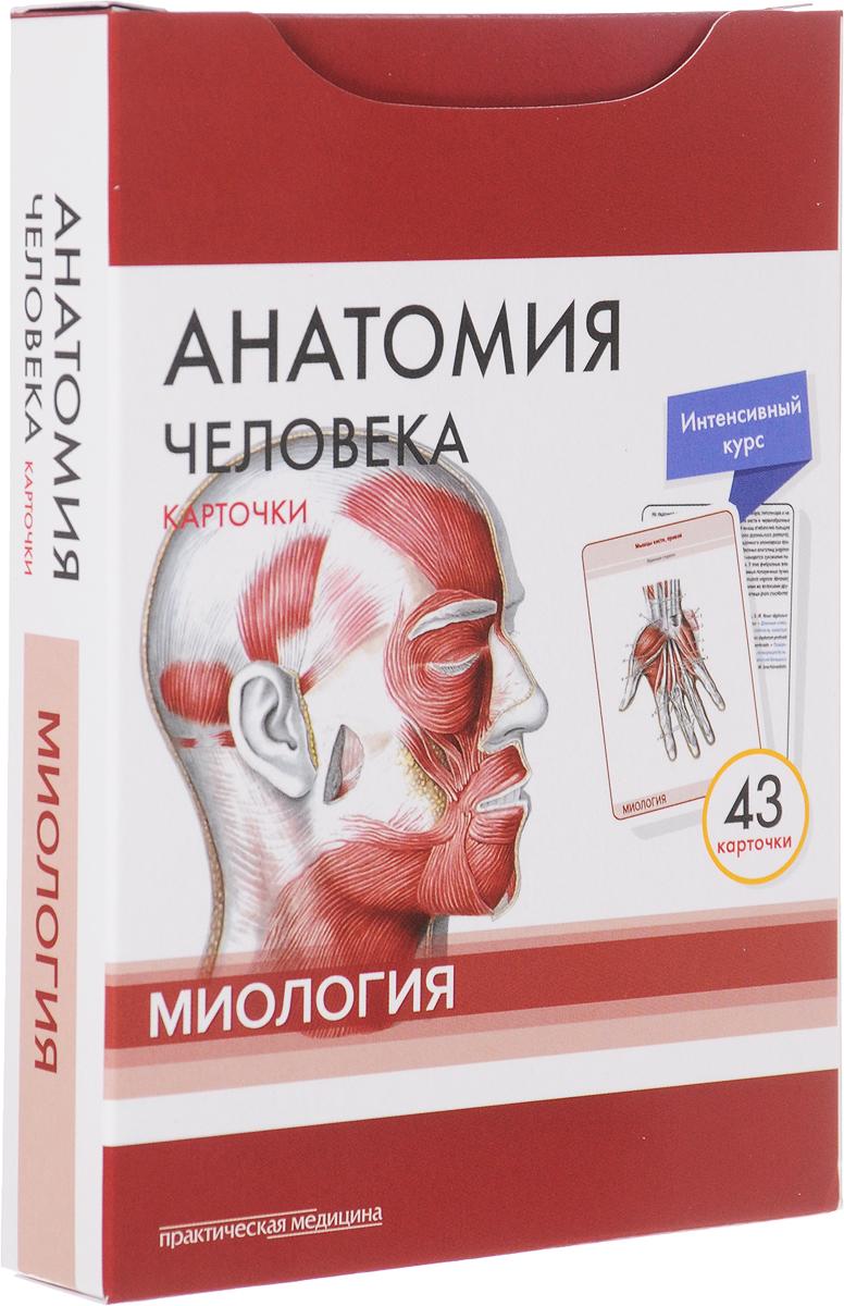 Анатомия человека. Миология (набор из 43 карточек)
