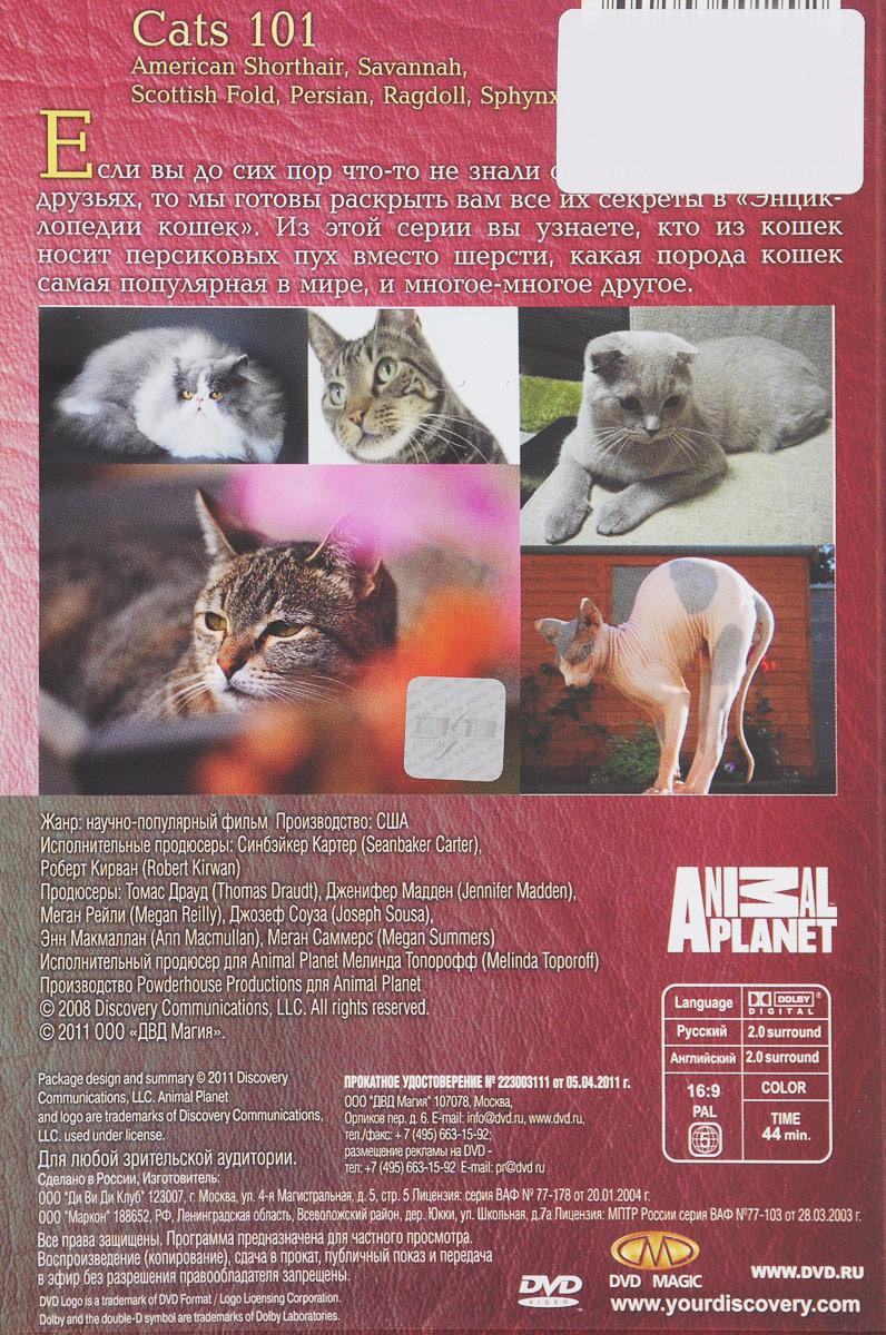 Discovery: Все о кошках (4 DVD) DVDМагия