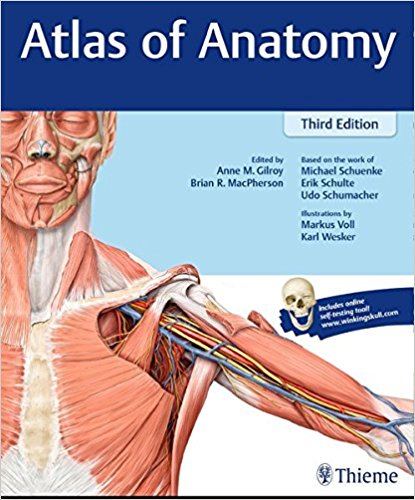 Atlas of Anatomy atlas of the developing mouse brain at e17 5 p0 and p6