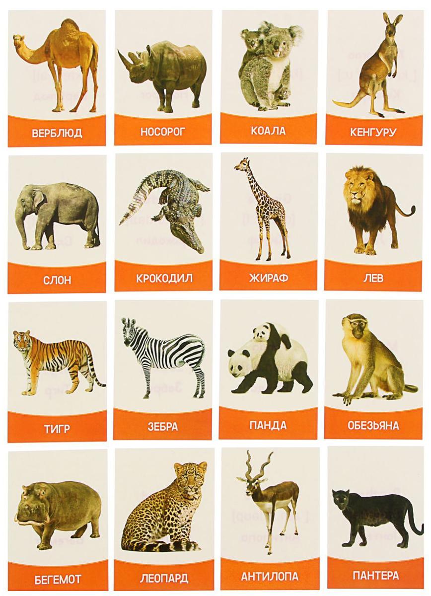 Лас Играс Обучающая игра Животные жарких стран 16 шт