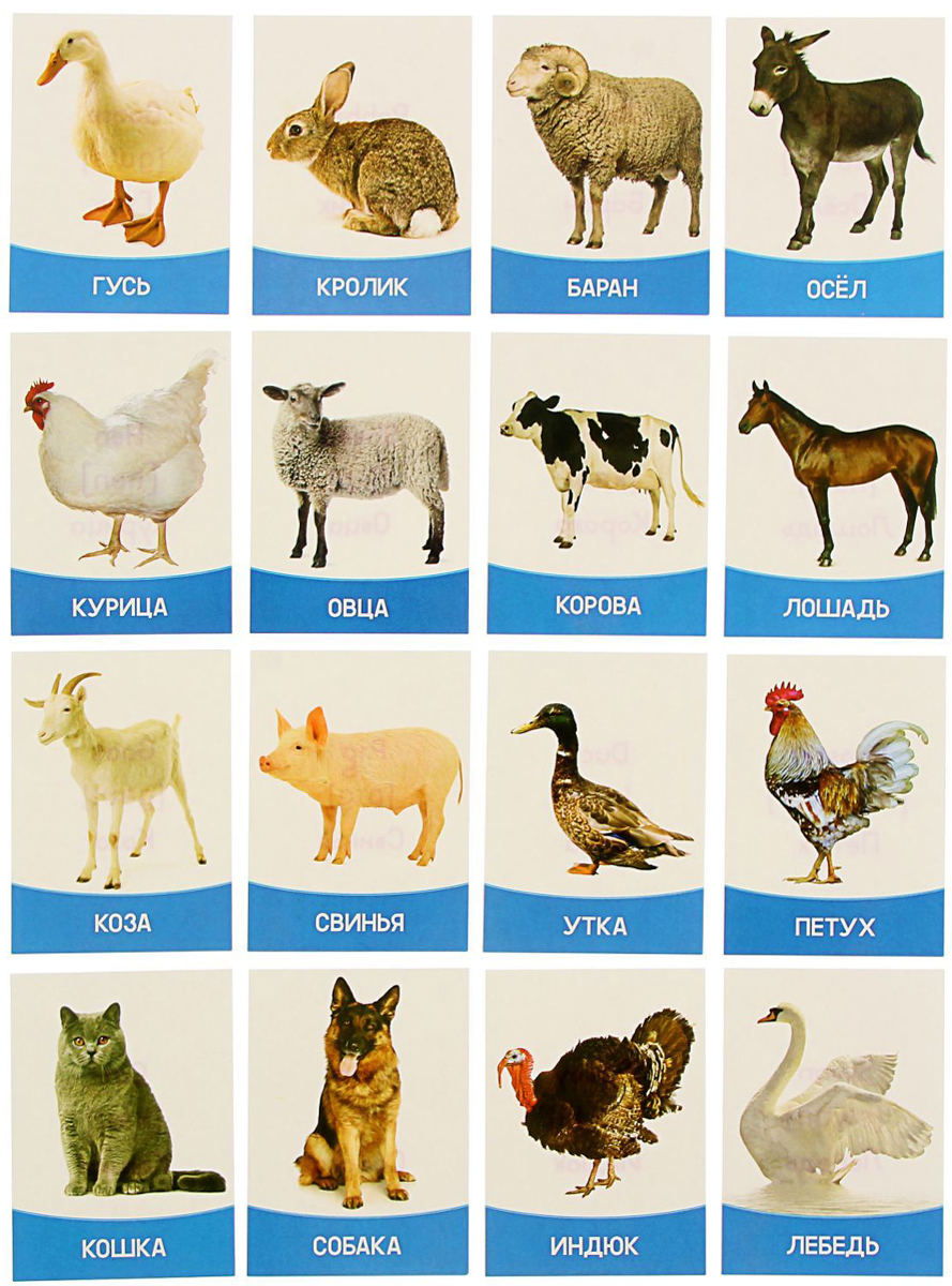 Лас Играс Обучающая игра Домашние животные и птицы Лас Играс