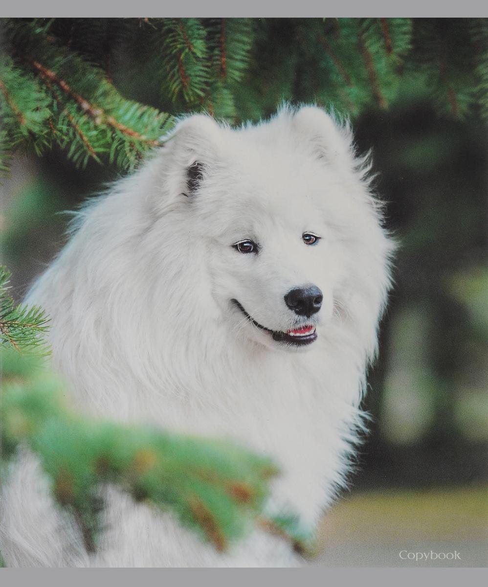 Канц-Эксмо Тетрадь Белоснежные собаки Собака под елкой 48 листов в клетку книги эксмо хозяин собаки