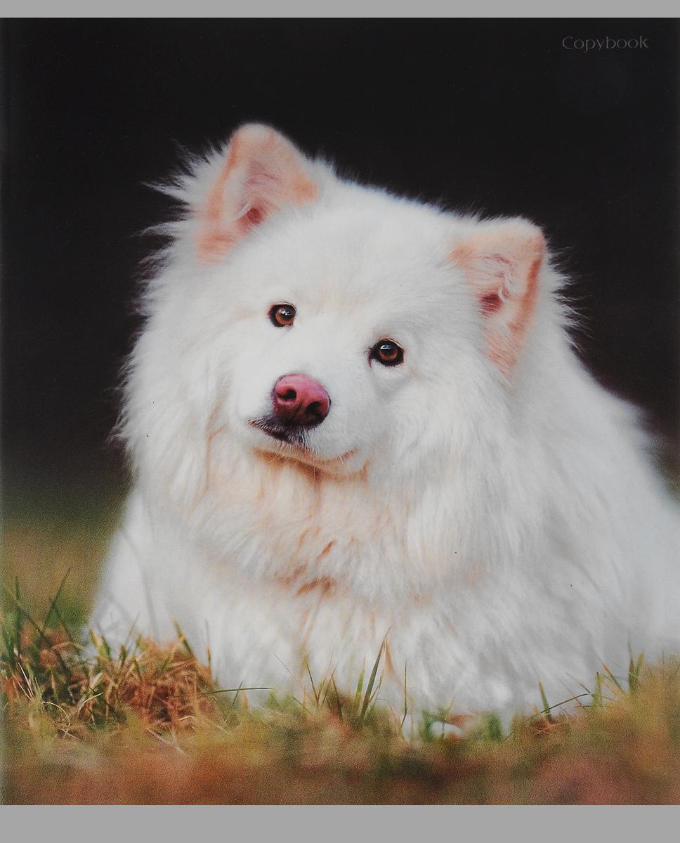 Канц-Эксмо Тетрадь Белоснежные собаки Собака на траве 48 листов в клетку эксмо собаки подарок для всех кто обожает собак