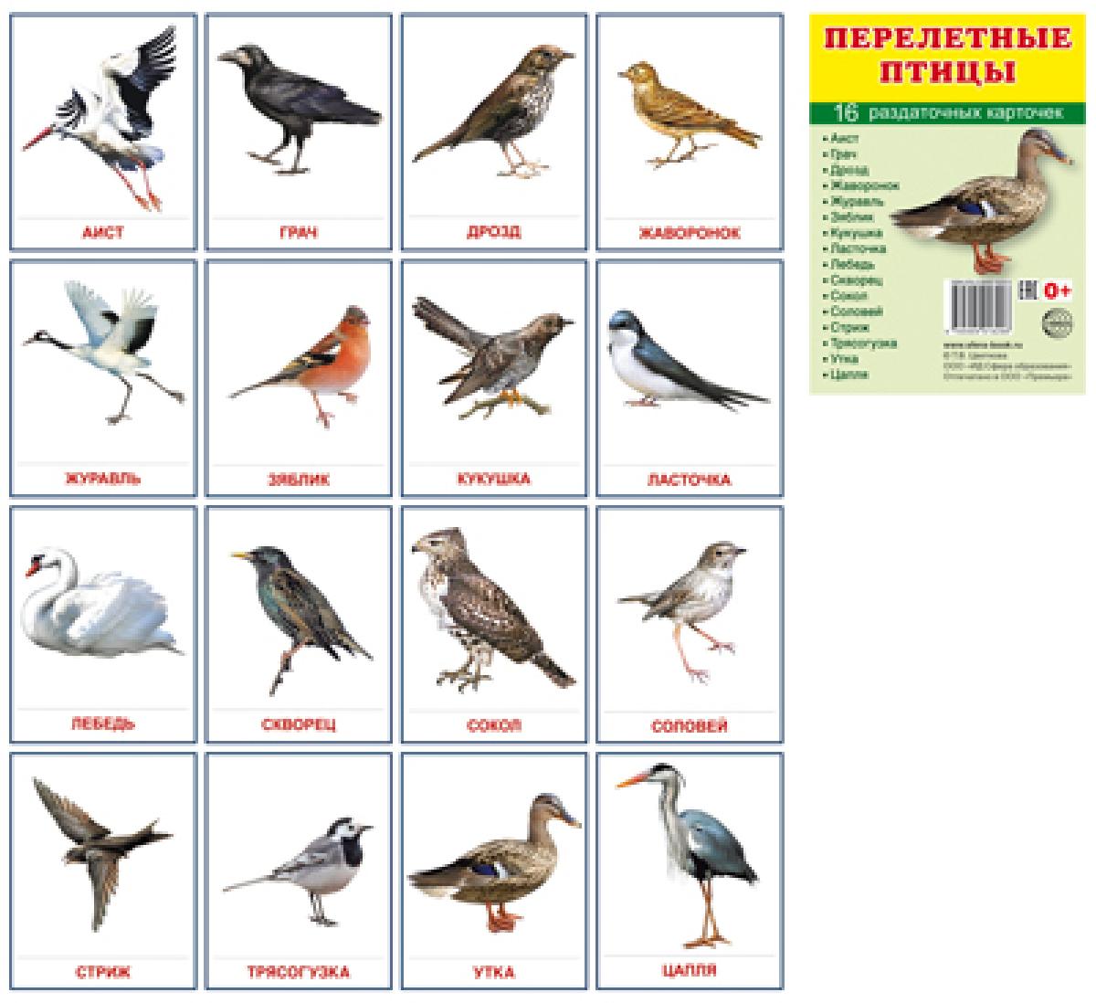 Т. В. Цветкова Перелетные птицы. Раздаточные картинки (набор из 16 карточек) перелетные птицы