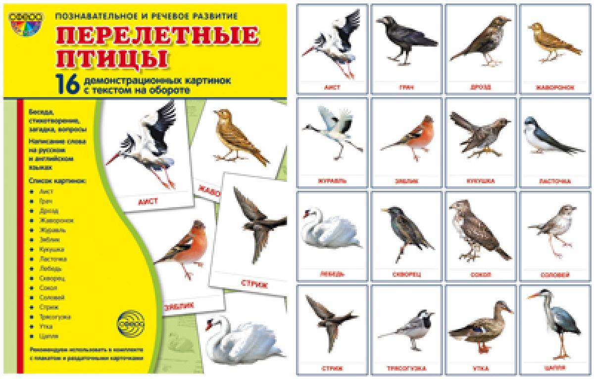 Т. В. Цветкова Перелетные птицы. Демонстрационные картинки (набор из 16 карточек) т в цветкова зимующие птицы раздаточные картинки набор из 16 карточек