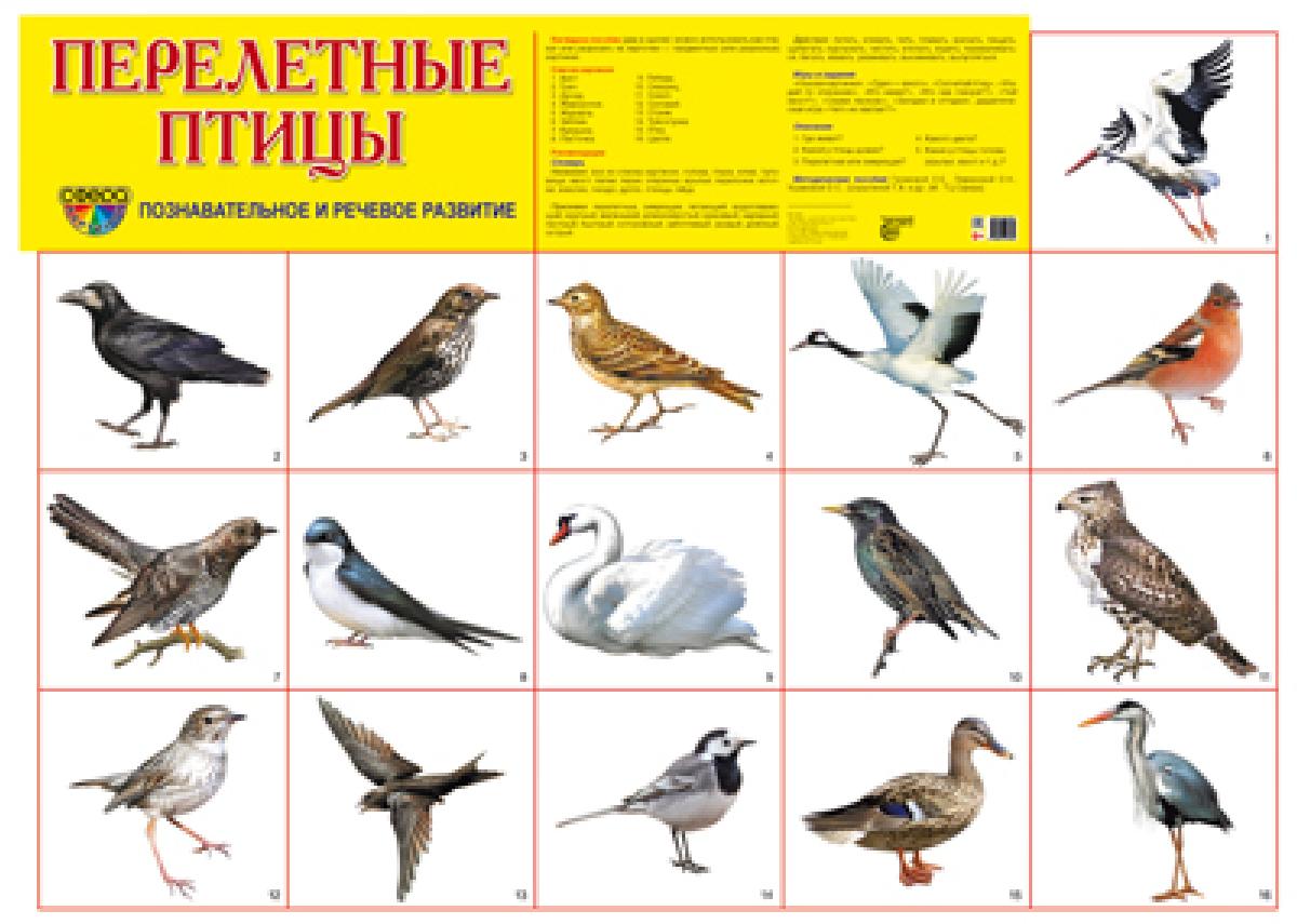 Перелетные птицы. Плакат айфон в тц xl