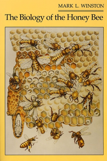 The Biology of the Honey Bee (Paper) beekeeping equipment bee honey extractor 6 frames