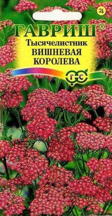 Семена Гавриш Тысячелистник. Вишневая королева розовый тысячелистник цвет