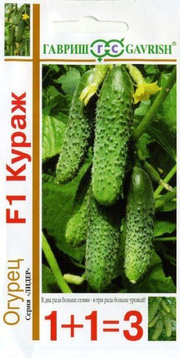 Семена Гавриш Огурец. Кураж F1. Серия 1+1=34601431014084Новый скороспелый партенокарпический гибрид (от всходов до плодоношения 45-50 дней), женского типа цветения, предназначен для выращивания в пленочных теплицах.Растения сильнорослые, побегообразовательная способность средняя. В узлах образуется по 2-4 завязи (до 5-6 штук). Зеленец темно-зеленый со светлыми полосами, длиной 12-15 см, массой 120-130 г, бугорчатый, белошипый, универсального использования. Вкусовые качества высокие, без горечи.Плотность посадки 2,5-3,0 раст/м2.Относительно устойчив к основным заболеваниям огурца.Урожайность 6-8 кг/раст.Уважаемые клиенты! Обращаем ваше внимание на то, что упаковка может иметь несколько видов дизайна. Поставка осуществляется в зависимости от наличия на складе.
