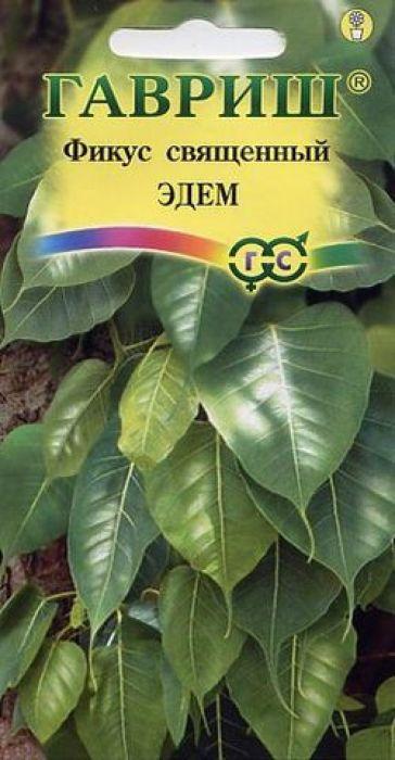 Семена Гавриш Фикус священный. Эдем4601431015807Вечнозеленое дерево, отличается хорошим ростом, имеет сильные ветви сероватого цвета. Листья красивые, сердцевидные, размером 8 -12 см, имеют гладкие края и длинное капельное острие и отчетливые прожилки. В домашних условиях достигает высоты 1-2 метров, великолепно подходит для культивации бонсая высотой до 50 см. Фикус неприхотлив и нетребователен к освещению. В весенне-осенний период фикусу требуется обильный полив, без застоя воды. Листья желательно регулярно опрыскивать.Зимой рекомендуется располагать в светлом, прохладном помещении с температурой не более 13°C, полив умеренный. Подкормки один раз в месяц комплексными минеральными удобрениями.Хорошо размножается семенами.При выращивании фикусов используют почвенную смесь, состоящую из 2 части листовой, 1 части торфяной земли и 1 части перегноя.Фикусы не любят когда их сажают в сосуд значительно больший, чем их корневая система, поэтому пересаживают их тогда, когда корни заполнят весь горшок или кадку. При этом растут довольно быстро, поэтому почва при пересадке должна быть питательной. Используют для озеленения комнат, залов, офисов, учреждений.Уважаемые клиенты! Обращаем ваше внимание на то, что упаковка может иметь несколько видов дизайна. Поставка осуществляется в зависимости от наличия на складе.
