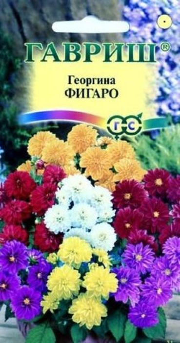 Семена Гавриш Георгина. Фигаро4601431022713