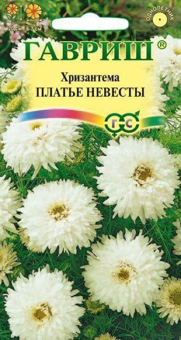 Семена Гавриш Хризантема. Платье невесты4601431042223Потрясающие белоснежные махровые соцветия диаметром 6-7 см в ореоле из ажурных изумрудных листьев. Растение быстро развивается и образует компактный густоветвистый кустик высотой 20 см. Цветет с июля до заморозков. Растение светолюбивое и холодостойкое, достаточно засухоустойчивое. Предпочитает легкие плодородные почвы с добавлением извести. При выращивании через рассаду семена высевают в ящики в апреле, прямой посев в грунт возможен в начале мая на глубину 1 см. При температуре почвы 15°C всходы появляются через 7-15 дней. В грунт растения высаживают в мае, выдерживая расстояние 20-25 см. Используют на клумбах, в миксбордерах, вазонах и контейнерах в сочетании с флоксами, цинерарией, сальвией и петунией.Уважаемые клиенты! Обращаем ваше внимание на то, что упаковка может иметь несколько видов дизайна. Поставка осуществляется в зависимости от наличия на складе.