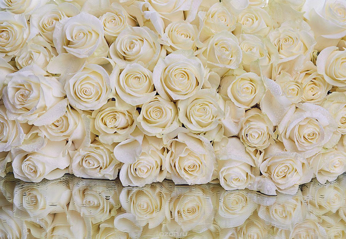 Фотообои PosterMarket Розы, цвет: белый, размер 368 х 254 смWM-07_белыйФотообои PosterMarket Розы, цвет: белый, размер 368 х 254 см