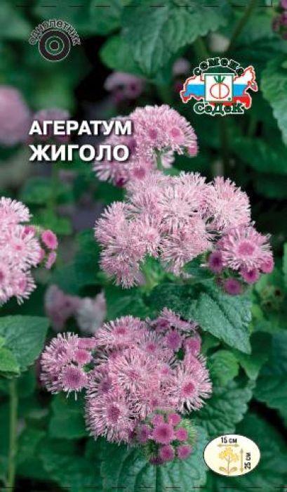 Семена Седек Агератум. Жиголо4607116262405Розовые пушистые шапки этого растения особенно эффектны в версальских цветниках и парадных партерныхзонах. Кустик компактный, сильноветвистый и хорошо облиственный. Многочисленные цветки собраны в небольшиесоцветия-корзинки. Растение теплолюбиво, хорошо растет на открытых солнечных участках и легких, с умеренным плодородием,почвах, отзывчиво на полив. После стрижки быстро отрастает и обильно цветет.Рекомендуется для бордюров и ковровых массивов, клумб, декорирования балконов, используется как горшечнаякультура. Уважаемые клиенты! Обращаем ваше внимание на то, что упаковка может иметь несколько видов дизайна.Поставка осуществляется в зависимости от наличия на складе.