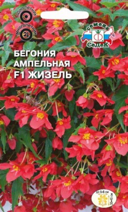 Семена Седек Бегония. Жизель ампельная клубневая4607116263389Обильноцветущая гибридная форма клубневой бегонии, образует 5-8 свисающих побегов длиной 30-45 см с цветоносами в пазухе каждого листа. Цветки ярко-красные, махровые и полумахровые, камелиецветные, до 6-8 см в диаметре. Цветение обильное и продолжительное.Тепло- и светолюбива, теневынослива, предпочитает умеренную температуру и повышенную влажность воздуха. Всходы держат под стеклом, увлажняя теплой (30° С) водой.Используется как горшечное растение для озеленения балконов, дизайнерских композиций в саду.Высаживается в кашпо, подвесные корзины, контейнеры. Осенью подсыхающие растения обрезают, горшки с клубнями убирают на хранение в прохладное место.Уважаемые клиенты! Обращаем ваше внимание на то, что упаковка может иметь несколько видов дизайна. Поставка осуществляется в зависимости от наличия на складе.