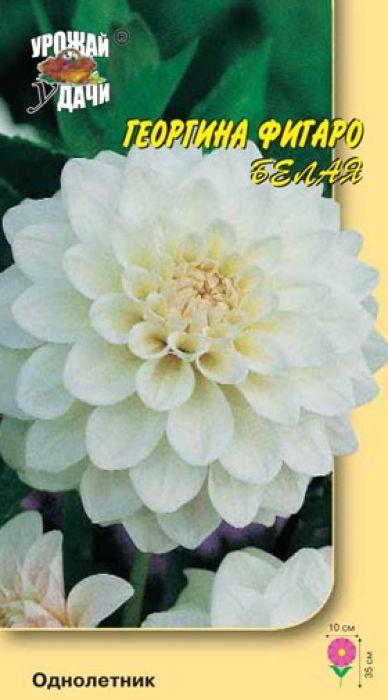 Семена Урожай удачи Георгина белая. Фигаро4607127310546Пышные и крупные цветки переливаются радугой ярких цветов. Высота растения до 35 см, диаметр соцветия до 10 см, белые. Что же касается продолжительности цветения, то георгин не имеет себе равных, одновременно цветет до 15 цветков на одном растении.Агротехника: Любит обильный полив и подкормки. Семена высевают в марте в рассадные ящики. Глубина заделки 0,3-0,5 см. При температуре почвы +18°С всходы появляются на 7-14 день. Сеянцы пикируют в горшочки. Рассаду высаживают по окончании весенних заморозков (в конце мая), выдерживая расстояние между растениями 30-50 см.Уважаемые клиенты! Обращаем ваше внимание на то, что упаковка может иметь несколько видов дизайна. Поставка осуществляется в зависимости от наличия на складе.