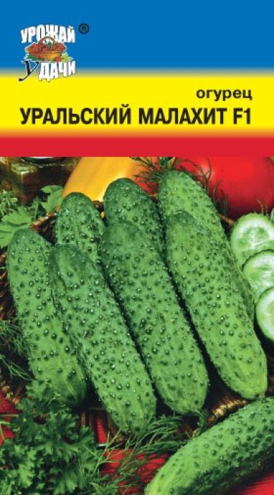 Семена Урожай удачи Огурец. Уральский малахит F14607127314988Партенокарпический гибрид, от всходов до плодоношения 45-50 дней, женского типа цветения, предназначен для выращивания в пленочных теплицах. Растения сильнорослые. В узлах образуется по 3-4 завязи. Зеленец темно-зеленый со светлыми полосами, длиной 11-14 см, массой 110-120 г, бугорчатый, белошипый, универсального использования. Вкусовые качества высокие, без горечи. Относительно устойчив к основным заболеваниям огурца. Урожайность 6-8 кг/раст. Агротехника: Посев - V-VI, высадка рассады - VI, схема посадки - 40 х 60 см, уборка урожая - VII-IX. Товар сертифицирован.Уважаемые клиенты! Обращаем ваше внимание на то, что упаковка может иметь несколько видов дизайна. Поставка осуществляется в зависимости от наличия на складе.