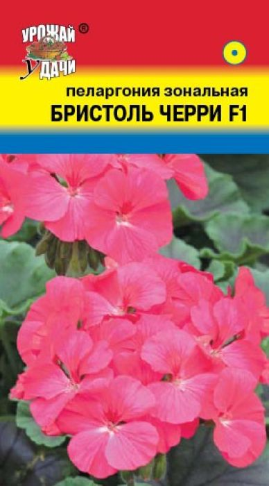 Семена Урожай удачи Пеларгония. Бристоль черри F14607127315404Привлекательные цветы! Растения высотой около 30-40 см. Соцветия диаметром до 10-15 см, вишневые. Стебли прямостоячие или ползучие. Листья очередные, лопастные или рассеченные. Пеларгония растение светолюбивое, переносит прямые солнечные лучи, может расти и в полутени. Является лекарственным растением. Прекрасно подходит для горшечной культуры, летом можно высаживать в открытый грунт и балконные ящики. Растение засухоустойчивое, предпочитает солнечное месторасположение и рыхлые плодородные почвогрунты. Посевы можно проводить начиная с января. Глубина заделки семян 0,5 см. Посадочную емкость накрывают стеклом и ставят в освещенное место. При температуре почвы +20° С всходы появляются на 7-10 день. В фазе 2-3-х настоящих листочков сеянцы пикируют. Для лучшего кущения рассаду прищипывают над 5-6 листом.Товар сертифицирован.Уважаемые клиенты! Обращаем ваше внимание на то, что упаковка может иметь несколько видов дизайна. Поставка осуществляется в зависимости от наличия на складе.