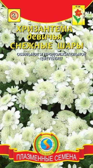 Семена Плазмас Хризантема девичья. Снежные шары4607171982683Многолетнее холодостойкое, травянистое, компактное растение, в северных регионах культивируемое как однолетнее. Высота 20-25 см. Оригинальные соцветия-корзинки (диаметром 3-4 см) округлые, махровые с крупными краевыми цветками, напоминают снежную звезду. Благодаря экзотической внешности, красива в любом цветочном оформлении. Можно сделать замечательную клумбу, которая станет предметом всеобщего восхищения. Срезанные цветы долго стоят в букетах. Хорошо сочетается с гелиотропом, сальвией, бархатцами.ПОСЕВ: май в открытый грунт, или осенью под зиму. Глубина заделки семян 3 мм. При выращивании рассадным способом семена сеют в марте. Содержат при температуре около 18°С, один раз пикируют в стаканчики или горшочки. В мае высаживают на постоянное место после закаливания, на расстояние 25-30 см. Молодые растения выносят слабые заморозки, а взрослые - осенью и более сильные (до -4°C). В районах с мягкой зимой можно выращивать как многолетник. Для усиления ветвления молодые растения прищипывают. Предпочитает известкованную, средне-плодородную, дренированную почву и солнечное местоположение, и чем больше солнца получает хризантема, тем пышнее и богаче она цветет.УХОД: полив в сухую погоду и 2-3 подкормки перед цветением раствором комплексного минерального удобрения. Если напала тля, достаточно удалить пораженные растения. Для стимуляции развития новых цветоносов рекомендуется проводить легкую обрезку.ЦВЕТЕНИЕ: июль-сентябрь.Уважаемые клиенты! Обращаем ваше внимание на то, что упаковка может иметь несколько видов дизайна. Поставка осуществляется в зависимости от наличия на складе.