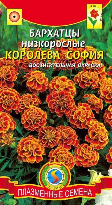 Семена Плазмас Бархатцы. Королева София4607171985783Потрясающая окраска этих восхитительных бархатцев никого не оставитравнодушным. Низкорослый сорт. Куст высотой 20-30 см, в период цветениявесь покрывается яркими двуцветными оранжево-красными с золотистымикраями цветками, собранными в махровые соцветия до 8 см в диаметре.Устойчив к непогоде. Отлично смотрится в оформлении балконных ящиков,вазонов. Прекрасно подойдёт для заполнения промежутков между болеевысокорослыми растениями, для оформления клумб, бордюров. Легко переносятпересадку.Посев: на рассаду в начале апреля. Глубина заделки семян 1 см. После окончаниязаморозков рассаду высаживают в открытый грунт по схеме 15 х 20 см. Возможнапрямая посадка семян в грунт, но при этом сокращаются срокицветения. Бархатцы нетребовательны к почве и влаге, но при избытке влагикрупные соцветия начинают загнивать.Уход: растение светолюбиво, засухоустойчиво. Для хорошего роста и цветениярастение нужно поливать в начале роста и подкармливать (2-3 подкормки синтервалом 7-10 дней).Цветение: с июня до заморозков. Для продления сроков цветения увядшиецветки удаляют.Уважаемые клиенты! Обращаем ваше внимание на то, что упаковка может иметьнесколько видов дизайна. Поставка осуществляется в зависимости от наличияна складе.
