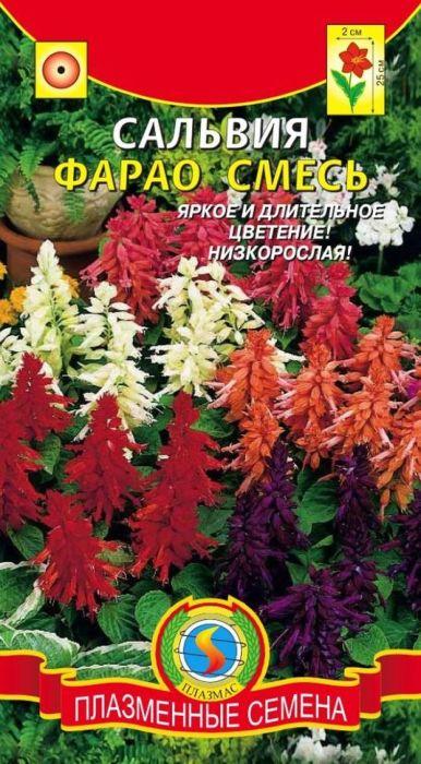 Семена Плазмас Сальвия. Фарао4650001402448