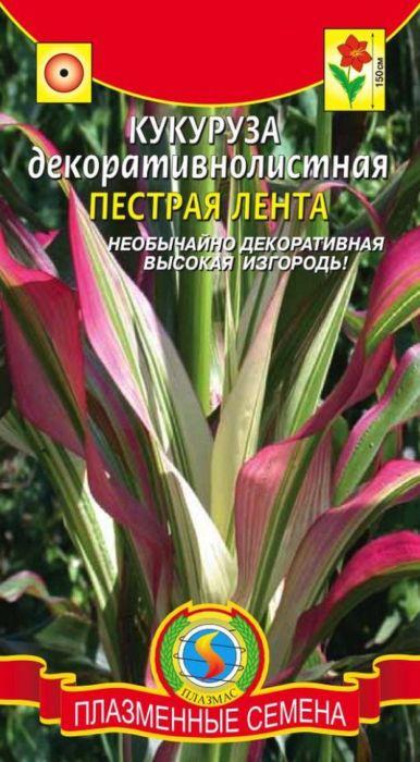 Семена Плазмас Кукуруза декоративнолистная. Пестрая лента4650001403292Теплолюбивый злак с необычайно декоративными лентовидными полосатымилистьями, в пазухах которых развиваются некрупные початки. Растение высотой1-1,5 м. Стебли прямостоячие, мощные, листовые пластинки линейно-ланцетные,с белыми, розовыми, пурпурными и зелёными продольными полосками. Колоскис пестичными цветками, собраны в початки, расположенные в пазухах средних иверхних листьев и окутанные влагалищами верхушечных листьев; колоски стычиночными цветками образуют верхушечную метелку. Цветет летом. Придаютневероятную декоративность любым цветникам.ПОСЕВ: апрель-май на рассаду в теплую, влажную почву. Глубина заделки - 5 см.Оптимальная температура для прорастания семян 15-17°С. Всходы пикируют вторфяные горшочки, а в конце мая начале июня высаживают в открытый грунт срасстоянием между растениями 40 см. Можно высевать сразу в открытый грунт.Перед посевом семена прогревают 4-5 дней на солнце, затем замачивают втеплой воде, и высевают, когда почва прогреется до 13°С. Необходимосолнечное, желательно защищенное от ветра местоположение, плодородные иувлажненные почвы.УХОД: регулярный полив. Недостаток влаги вызывает увядание растений,ослабление фотосинтеза, преждевременное подсыхание листьев. Дляулучшения роста и т.д, рекомендуется проводить подкормки комплекснымиминеральными удобрениями в период цветения и формирования початков.Уважаемые клиенты! Обращаем ваше внимание на то, что упаковка может иметьнесколько видов дизайна. Поставка осуществляется в зависимости от наличияна складе.