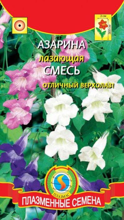 Семена Плазмас Азарина лазающая. Смесь4650001404619Находка для озеленения балконов, декорирования беседок, стен. Ваша задачаобеспечить опоры, цепляясь за которые, растение будет карабкаться вверх,вырастая в высоту до 2-3 метров. Растение с вьющимся разветвленнымстеблем. Покрыто разноцветными колокольчатыми цветками, ярко светящихсяна фоне бархатистых темно-зеленых мелких листьев, по своей форме похожихна листья плюща. Цветки трубчатые, длиной более 3 см, венчики окрашены вбелый, розовый, синий или лиловый цвета. Можно выращивать и как ампельноерастение.Посев: на рассаду - в феврале-апреле, посев поверхностный. Семена слегкавдавливают в почву. Емкость накрывают пленкой, ставят в освещенное место.Почву необходимо поддерживать во влажном состоянии. Всходы появляютсячерез 8-14 дней при оптимальной температуре 20°С. Рассаду пикируют вторфяные горшочки по 2-3 штуки и после минования угрозы заморозковвысаживают в открытый грунт, оставляя между растениями 40-50 см. Длякущения молодые растения можно прищипнуть. Предпочитает солнечное,теплое место, защищенное от ветров, с дренированной, богатой садовойпочвой.Цветение: с конца июня или середины июля до заморозков. Уважаемые клиенты! Обращаем ваше внимание на то, что упаковка может иметьнесколько видов дизайна. Поставка осуществляется в зависимости от наличияна складе.
