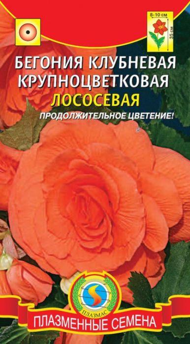 Семена Плазмас Бегония клубневая крупноцветковая. Лососевая4650001407535Превосходная крупноцветковая бегония с густомахровыми камелиевиднымицветками. Растение высотой 30-35 см с мощными побегами. Оптимальна длявыращивания в полутени, но в условиях обильного и регулярного полива можновыращивать на открытых солнечных участках. Цветение обильное ипродолжительное. Растение образует крупные клубни, которые можносохранять до следующего сезона. Её яркие густомахровые цветы отличноукрасят вазоны в вашем саду или подоконник в доме. Посев: в декабре-феврале в слабо кислый субстрат (pН 5,5-5,8) при температуре22-25°С и влажности 95%. Для прорастания необходим свет поэтому семена неприсыпают. Ящики накрывают плёнкой для поддержания влажности.Внимание: семена в гранулах! Не допускайте пересыхания оболочки гранулы.Всходы появляются на 15-20 день. 24-часовое досвечивание на этойстадии повышает всхожесть, улучшает качество рассады и сокращает время доцветения. После появления семядолей проводят первую подкормку, совмещаяеё с поливами. Температуру снижают до 18-22°С. На первых стадиях развитиясубстрат должен быть постоянно влажным, но без застоя воды. Первуюпикировку проводят через 5-7 недель после посева, когда появятся настоящиелистья, оставляя между растениями 6-8 см. В дальнейшем, растения поливают более умеренно. Бегонияпредпочитает длинный световой день. Уход: после окончания цветения бегонию готовят к зимнему покою: уменьшаютполив; наземную часть обрезают. Горшок с растением хранят в сухом месте притемпературе 14-16°С, лишь изредка увлажняя почву. В марте пересаживают всвежую земляную смесь, возобновляют полив и подкормку. Цветение: от посева до получения цветущих растений проходит 15-18 недель, нодля цветения в конце мая, бегонию можно сеять раньше (за 15-16 недель допредполагаемой даты цветения), чтобы растения были более крепкими. В такомслучае при выращивании обязательно используют досвечивание не менее 14-тичасов, а в апреле содержат растения при температуре 16- 18°С (не