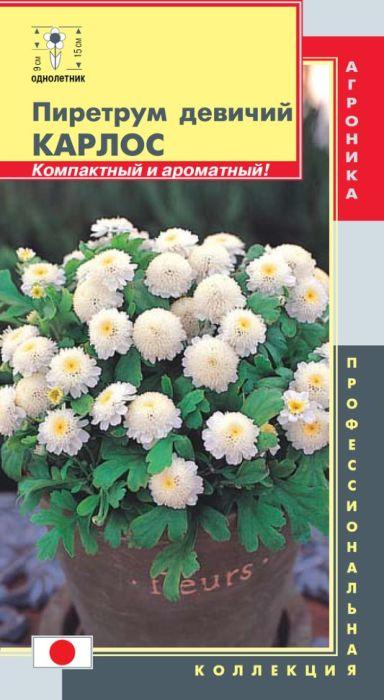 Семена Плазмас Пиретрум девичий. Карлос4650001407917Эта компактная ромашка с белыми ароматными цветками, идеально подойдетпри создании низкорослых клумб, украшения балконных ящиков иликонтейнеров, для высадки в вазоны. Это многолетнее холодостойкое,неприхотливое растение, в России культивируется как однолетнее. Высота 10-15 см. Оригинальные белые соцветия-корзинки (диаметром 2-4 см), махровые,шаровидной формы. С помощью этого пиретрума можно создать замечательнуюклумбу, которая станет предметом всеобщего восхищения. Хорошо сочетается сгелиотропом, сальвией, бархатцами.ПОСЕВ: май в открытый грунт, или осенью (под зиму). Глубина заделки семян 3мм. При выращивании рассадным способом семена сеют в марте. Содержат притемпературе около 18°С, один раз пикируют в стаканчики или горшочки. В маевысаживают на постоянное место после закаливания, на расстояние 25-30 см.Молодые растения выносят слабые заморозки, а взрослые - осенью и болеесильные (до -4°С). В районах с мягкой зимой можно выращивать какмноголетник. Для усиления ветвления молодые растения прищипывают.Предпочитает известкованную, средне-плодородную, дренированную почву исолнечное местоположение, и чем больше солнца получает хризантема, темпышнее и богаче она цветет. Может расти в полутени и даже в тени, но приэтом немного вытягивается.УХОД: полив в сухую погоду и 2-3 подкормки перед цветением растворомкомплексного минерального удобрения. Если напала тля, достаточно удалитьпораженные растения. Для стимуляции развития новых цветоносоврекомендуется проводить легкую обрезку.ЦВЕТЕНИЕ: июль-сентябрь. Уважаемые клиенты! Обращаем ваше внимание на то, что упаковка может иметьнесколько видов дизайна. Поставка осуществляется в зависимости от наличияна складе.