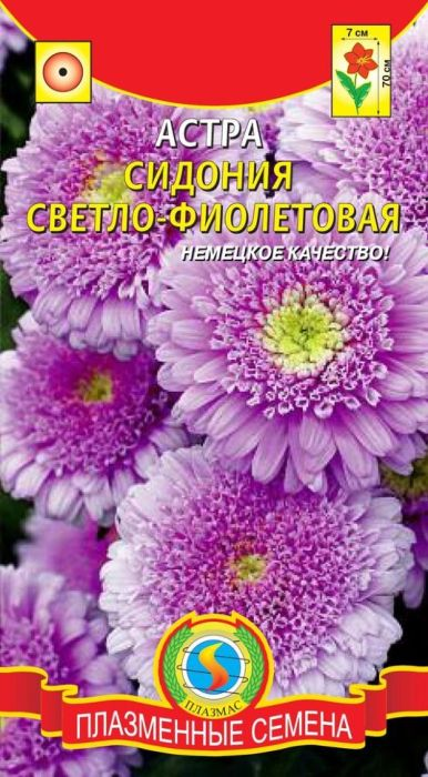 Семена Плазмас Астра. Сидония Фиолетовая4650001409102