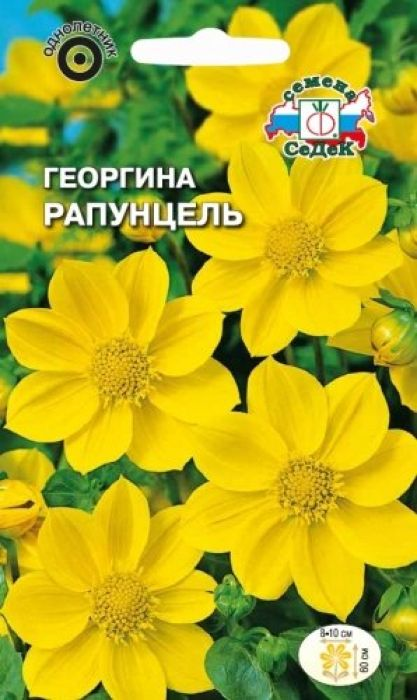 Семена Седек Георгина. Рапунцель4690368023122Относится к группе немахровых георгин под названием Веселые ребята. Растение травянистое, кустистое с крепкими прямыми стеблями и темно-зелеными многочисленными листьями, высотой 60 см. Соцветия-корзинки диаметром 8-10 см, состоят из жёлтых язычковых и жёлтых крупных трубчатых цветков. Цветение длительное и непрерывное до заморозков. Растение тепло- и светолюбиво, предпочитает защищенные от холодных и сильных ветров места, рыхлые плодородные почвы, умеренное увлажнение. Используется в групповых и одиночных посадках, на клумбах, рабатках, в вазонах и балконных ящиках. Товар сертифицирован.Уважаемые клиенты! Обращаем ваше внимание на то, что упаковка может иметь несколько видов дизайна. Поставка осуществляется в зависимости от наличия на складе.