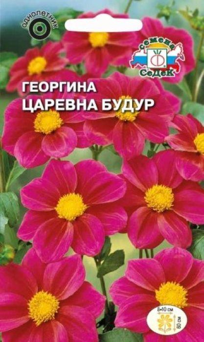 Семена Седек Георгина. Царевна Будур4690368023146Относится к группе немахровых георгин под названием Веселые ребята. Растение травянистое, кустистое с крепкими прямыми стеблями и темно-зелеными многочисленными листьями, высотой 60 см. Соцветия-корзинки диаметром 8-10 см, состоят из пурпурных язычковых и жёлтых крупных трубчатых цветков. Цветение длительное и непрерывное до заморозков. Растение тепло- и светолюбиво, предпочитает защищенные от холодных и сильных ветров места, рыхлые плодородные почвы, умеренное увлажнение. Используется в групповых и одиночных посадках, на клумбах, рабатках, в вазонах и балконных ящиках.Товар сертифицирован.Уважаемые клиенты! Обращаем ваше внимание на то, что упаковка может иметь несколько видов дизайна. Поставка осуществляется в зависимости от наличия на складе.