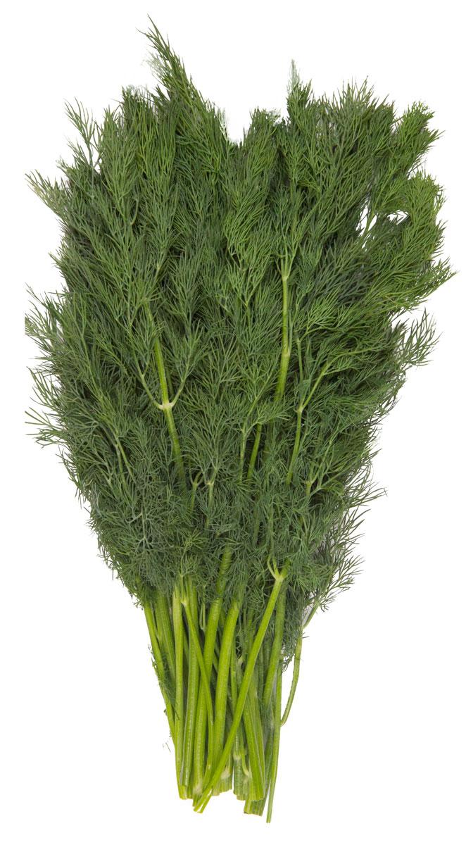 Зеленый сад Укроп, 100 г18074В укропе, а особенно в листве, содержится повышенное количество витамина С. Также эта трава богата на витамины группы В, Е и Р. Самое известное свойство укропа - это положительное воздействие на работу пищеварительной системы. При регулярном потреблении улучшается пищеварение, повышается аппетит, а при язве желудка или двенадцатиперстной кишки употребление укропа оказывает обезболивающий эффект. В укропе содержится минимум калорий и полностью отсутствуют жиры, поэтому его рекомендуют включать в рацион диабетикам и людям с повышенным уровнем холестерина. Добавление в пищу пряной травки благоприятно влияет на состояние крови, так как в растении присутствует фолиевая кислота, железо, магний и аскорбиновая кислота - эти вещества участвуют в образовании эритроцитов и гемоглобина. Регулярное потребление укропа положительно влияет на зрение, благодаря содержанию бета-каротина.