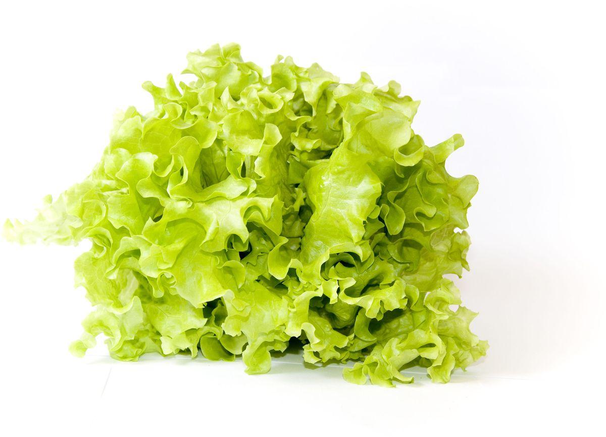Салат Листовой, 1 шт127Чрезвычайно нежный и сочный листовой салат является не только прекрасным компонентом различных витаминных блюд, но и быстро справляется с усталостью и депрессивным состоянием, инфекциями, укрепляет костную массу, выводит шлаки и токсины, стимулирует головной мозг, улучшает зрение.Уважаемые клиенты! Обратите, пожалуйста, внимание: изображение товара на сайте может отличаться от фактического вида товара. Фото представлено для визуального восприятия товара.