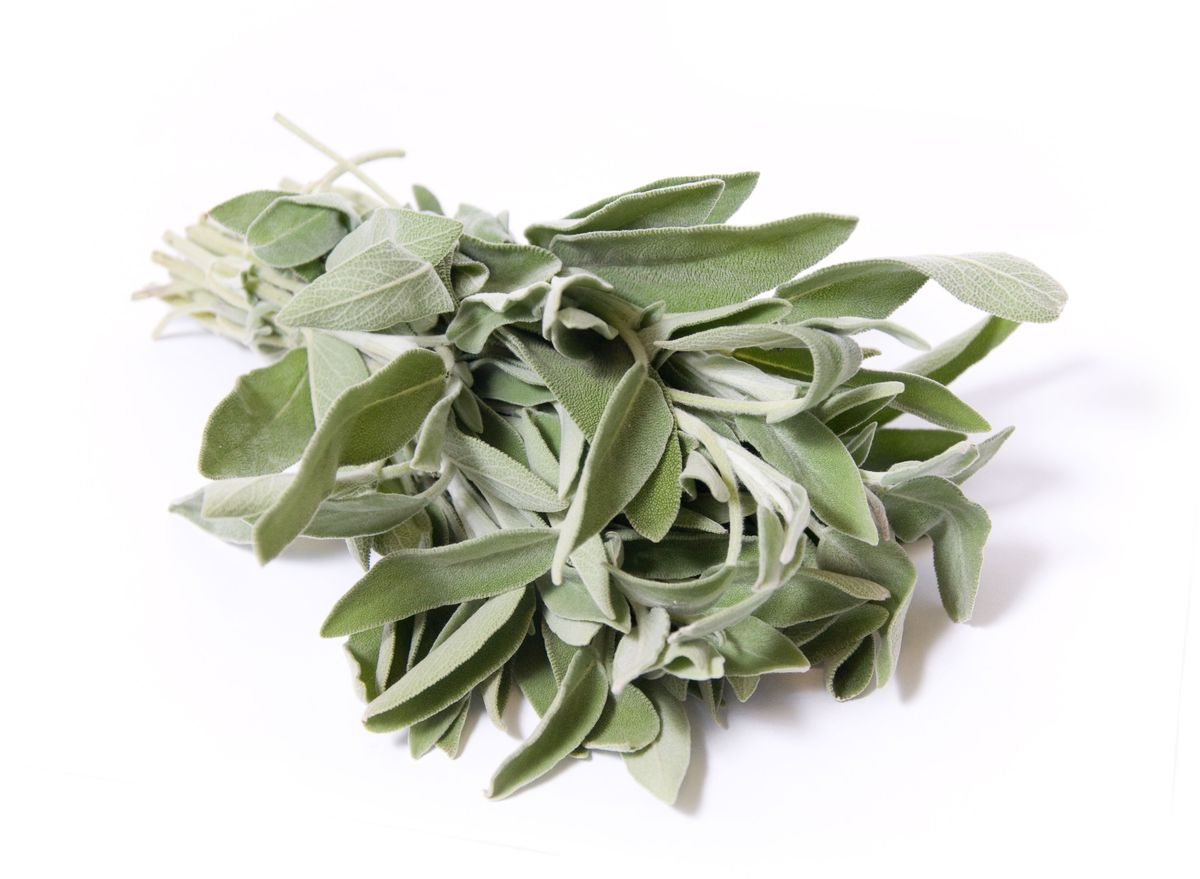Шалфей, 25 г442Шалфей в кулинарии применяется в свежем, сушеном и жареном виде.Итальянские повара добавляют пряность для придания пикантного вкуса к телятине, говядине, рыбе. Порошок из листьев используют при изготовлении пива, засолке свиного сала. Его можно сочетать с сыром, овощами (тыквой, кабачками, картофелем).Более приятными на вкус он делает супы с фасолью и горохом, сваренные на мясном бульоне. В бульон его добавляют после готовности, чтобы аромат не был слишком насыщенным. Подходит он для фаршировки яиц, курицы, индейки. Измельченными в порошок листьями и веточкам приправляют жирные сорта мяса при тушении. Мясо при этом становится нежным, вкусным и легче усваивается.Начинка для пирогов с ложкой измельченных листьев растения также будет более ароматной. Приправляют им также кисломолочные продукты. Считается, что он способен уменьшить количество жира и сделать вкус мяса мягче.Пряность помогает дольше сохранить продукты, потому что препятствует появлению бактерий.Жареный шалфей в кулинарии кладут в гамбургеры, чизбургеры, сэндвичи с курицей и мясом. Молодые свежие листья шалфея лекарственного имеют горьковато-пряный вкус. Их добавляют в салат, крошат в овощные рагу и рыбные блюда. Во Франции порошок из листьевшалфея добавляют в тарелку с бульоном, омлетом, отварной рыбой и тушеной говядиной. В Китае шалфейиспользуют как добавку к зеленым сортам чая. Уважаемые клиенты! Обратите, пожалуйста, внимание: изображение товара на сайте может отличаться от фактического вида товара. Фото представлено для визуального восприятия товара.