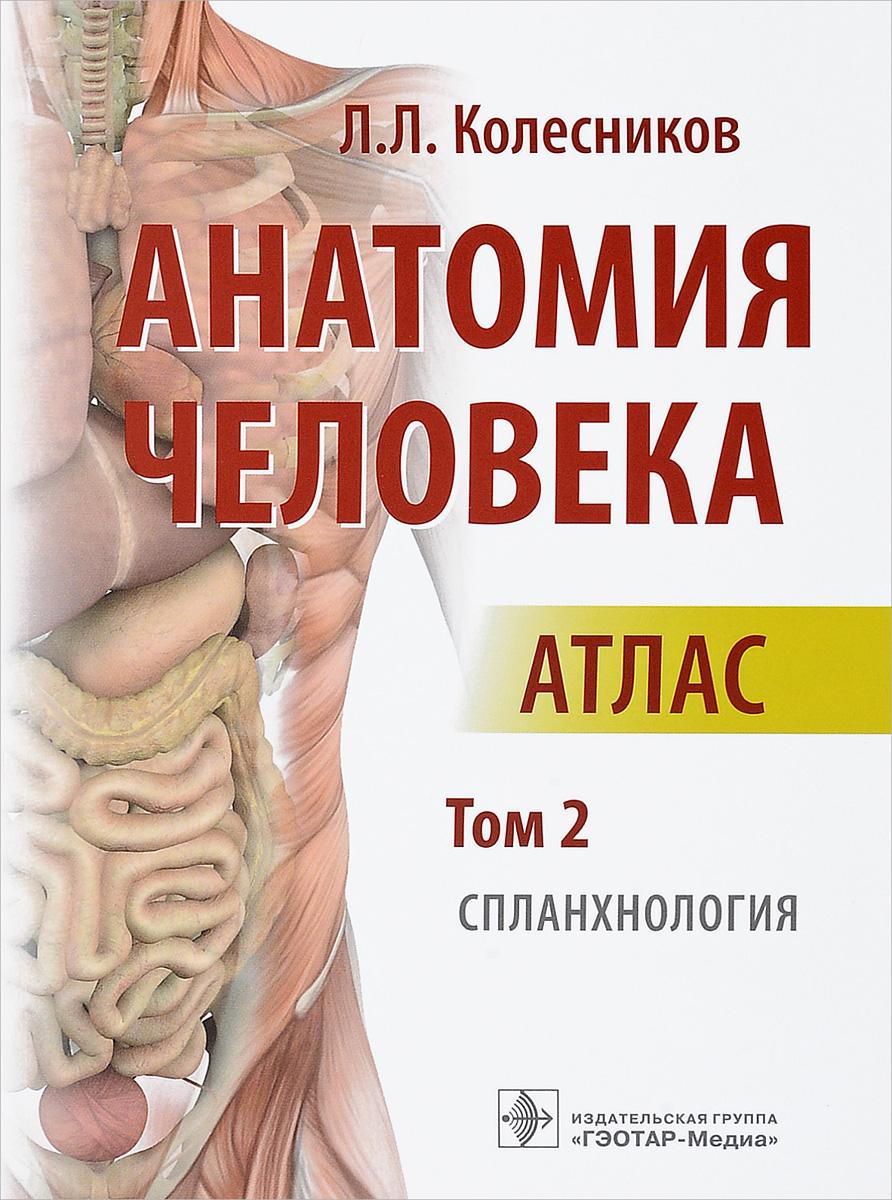 Л. Л. Колесников Анатомия человека. Атлас. В 3 томах. Том 2. Спланхнология колесников л анатомия человека атлас том 2 спланхнология