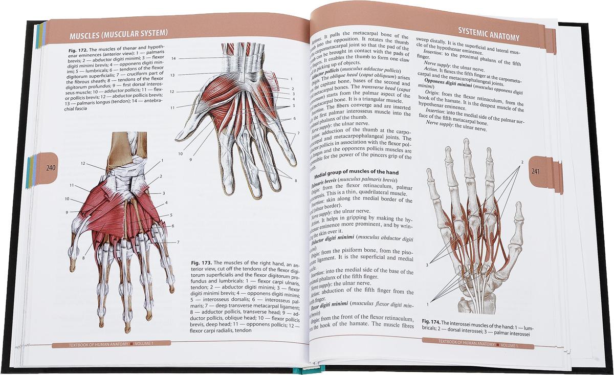 Textbook of Human Anatomy Volume 1: Locomotor apparatus. L. L. Kolesnikov, D. V. Nikityuk, S. V. Klochkova, I. G. Stelnikova