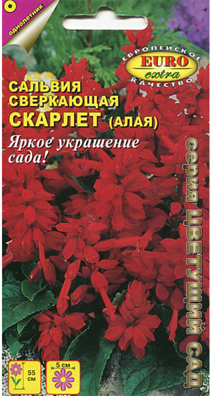 Семена Аэлита Сальвия. Скарлет4601729071850Обильноцветущее низкорослое растение. Кустики крепкие, компактные, хорошо облиственные, с множеством цветоносов. Цветки собраны в кистевидные соцветия 15-17 см длиной. Цветение раннее и продолжительное, с июня до первых заморозков. Растения тепло- и светолюбивые, хорошо переносят воздействие дождя и ветра. Отлично смотрятся в групповых посадках на клумбах, в бордюрах. Хорошо подходят для выращивания в садовых вазах и балконных ящиках. Посев семян на рассаду в марте-первых числах апреля. Всходы появляются на 8-10 день. Пикировка в фазе двух настоящих листьев. Высадка в открытый грунт закаленной рассады в конце мая-начале июня. Растениям необходимы своевременные поливы, прополки, рыхления и подкормки.Товар сертифицирован.Уважаемые клиенты! Обращаем ваше внимание на то, что упаковка может иметь несколько видов дизайна. Поставка осуществляется в зависимости от наличия на складе.