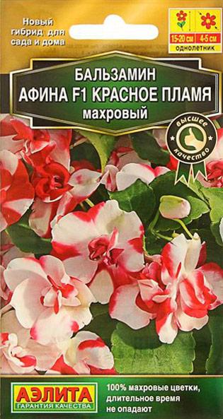 Семена Аэлита Бальзамин махровый. Афина F1 красное пламя4601729087981Семена Аэлита Бальзамин махровый. Афина F1 красное пламя. Всхожесть: 99%. Однолетник. Высота растения 15 20 см. Диаметр цветка 4 5 см. За яркие цветки бальзамин в народе называют огонек. Популярное комнатное растение все чаще выращивают как летник. Новая компактная (15-20 см) гибридная серия отличается необычной пестрой окраской крупных (5 см) махровых цветков и обильнейшим цветением. Благодаря этому создается впечатление пестрого ковра. Длительное время цветы не опадают и сохраняют декоративность.Кустики отлично смотрятся в контейнерах. Посадки можно разместить даже в довольно густой полутени, так как растения нетребовательны к освещению. В таких условиях окраска цветков бывает даже ярче, чем на солнце.Не рекомендуется сажать бальзамин в ветреных местах. Растения осенью можно пересадить в горшки и выращивать в комнатах или сохранить до весны с последующей высадкой гибрида в грунт. Товар сертифицирован. Уважаемые клиенты! Обращаем ваше внимание на то, что упаковка может иметь несколько видов дизайна. Поставка осуществляется в зависимости от наличия на складе.