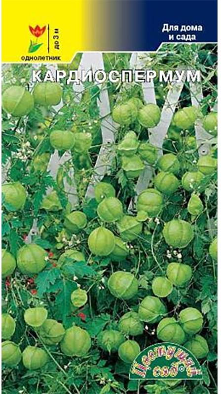 Семена Цветущий сад Кардиоспермум. Лиана4607021813457Травянистая лиана с небольшими, белыми цветками. Декоративны многочисленные, зеленые шаровидные плоды. Используется для украшения пергол, балконов, как кулисное растение, для сухих букетов.В начале весны следует высадить семена на рассаду. По окончании майских заморозков можно высаживать растение в открытый грунт, предварительно подготовив опоры для роста в высоту. Цветет с июля по август, плоды появляются с августа и до первых заморозков.Товар сертифицирован. Уважаемые клиенты! Обращаем ваше внимание на то, что упаковка может иметь несколько видов дизайна. Поставка осуществляется в зависимости от наличия на складе.