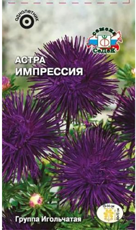 Семена Седек Астра. Импрессия4607116262788Относится к группе Игольчатых астр, классу язычковые, типу игольчатые, раннего срока цветения.Куст маловетвистый, колонновидный, прочный, высотой 60-70 см, с 10-12 соцветиями. Соцветия крупные, диаметром 13-14 см, темно-фиолетовые, полусферические, плоскоокруглые, махровые. Язычковые цветки узкие, изящные, сросшиеся в трубки, длиной до 3,5 см.Хорошо растет на освещенных, защищенных от ветра участках с хорошо дренированной, нейтральной или произвесткованной почвой.Цветение продолжается 45-50 дней.Используется в групповых и одиночных посадках, преимущественно на срезку. Уважаемые клиенты! Обращаем ваше внимание на то, что упаковка может иметь несколько видов дизайна. Поставка осуществляется в зависимости от наличия на складе.