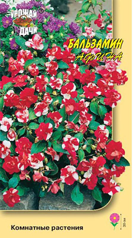 Семена Урожай уДачи Бальзамин махровый. Афина4680206020772Изобилие ярких двухцветных махровых цветов. Очаровательный куст с густой листвой, высотой до 30 см. Цветы махровые красно-белые. Цветет очень обильно. Превосходно подходит для оформления подоконников и балконов, используют для клумб, рабаток.Агротехника: Растение теплолюбивое, хорошо растет как на открытых солнечных местах, так и в полутени. Обильно цветёт на лёгких, плодородных почвах. Полив регулярный, почва должна оставаться умеренно влажной. Хорошо переносит стрижку. Размножают семенами и черенками. Семена засыпают мелкозернистым песком слоем 3 мм и поддерживают постоянную влажность. При температуре почвы +18-20°С всходы появляются через 15-20 дней. Сеянцы пикируют в горшочки по одному растению. В грунт высаживают по окончании весенних заморозков, расстояние между растениями 15-20 см.Уважаемые клиенты! Обращаем ваше внимание на то, что упаковка может иметь несколько видов дизайна. Поставка осуществляется в зависимости от наличия на складе.