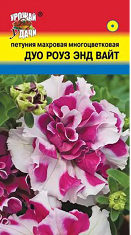 Семена Урожай удачи Петуния махровая многоцветковая. Дуо Роуз энд Вайт4607127339929Многочисленные махровые шарики цветов на раскидистых кустиках. Растение высотой 25-35 см и диаметром около 30 см. Цветы махровые двуцветные - с белыми и розовыми лепестками. Обильно цветет с июня по сентябрь.Агротехника: Растение светолюбивое, засухоустойчивое, хорошо растет на любых питательных почвогрунтах. Посев семян на рассаду проводят в феврале-марте. Семена слегка вдавливают в почву, землей не присыпают. Посадочную емкость накрывают стеклом и ставят в освещенное место. При температуре почвы +18-20°С всходы появляются на 14-20 день. Сеянцы пикируют в фазе двух настоящих листьев. Рассаду высаживают в открытый грунт после окончания весенних заморозков.Уважаемые клиенты! Обращаем ваше внимание на то, что упаковка может иметь несколько видов дизайна. Поставка осуществляется в зависимости от наличия на складе.