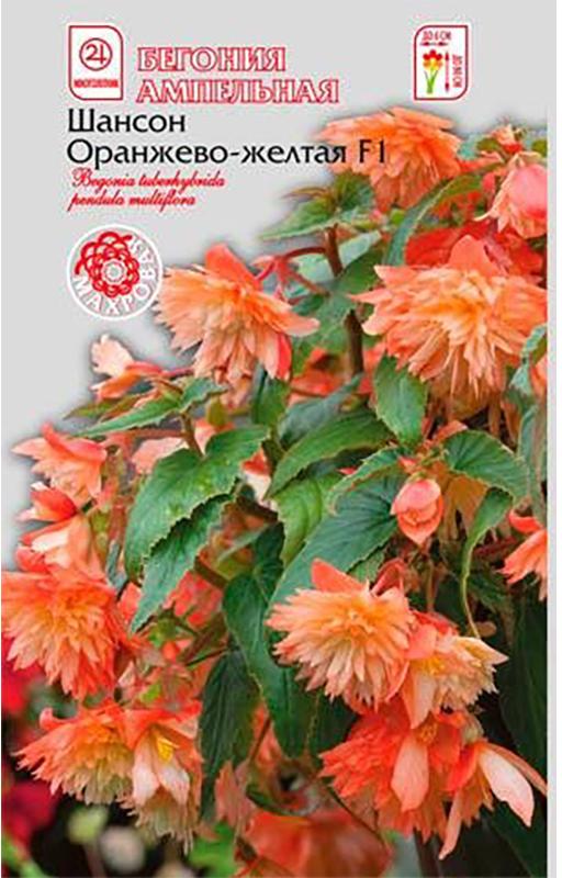 Семена Алтая Бегония. Шансон Оранжево-желтая F1 ампельная4620009639726Превосходная ампельная бегония с махровыми и полумахровыми цветками. Растение формирует 5-8 основных побегов, на которых в пазухе каждого листа расположены длинные цветоносы с камелиевидными цветками правильной формы, диаметром до 8 см. Цветение обильное и продолжительное, с мая по октябрь. Отлично подходит для выращивания в цветочных ящиках, на возвышенных местах и в подвесных корзинах.Растение предпочитает светлые или полутенистые места, богатую органикой постоянно увлажнённую почву. Семена на рассаду высевают с декабря по февраль. Гранулы располагают по поверхности слегка уплотнённой и увлажненной, богатой гумусом почвы, увлажняют из распылителя и накрывают стеклом. Всходы появляются только на свету (избегайте попадания прямых солнечных лучей) через 10-15 дней при температуре 22-24°С. При появлении 2-3 настоящих листочков сеянцы пикируют в отдельные горшочки. После окончания цветения растение обрезают, горшок с растением помещают в сухое место с температурой 14-16°С, лишь изредка увлажняя почву.Уважаемые клиенты! Обращаем ваше внимание на то, что упаковка может иметь несколько видов дизайна. Поставка осуществляется в зависимости от наличия на складе.