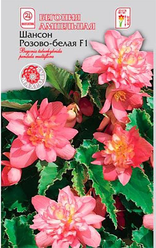 Семена Алтая Бегония ампельная. Шансон. Розово-белая F14620009639733Превосходная ампельная бегония с махровыми и полумахровыми цветками. Растение формирует 5-8 основных побегов, на которых в пазухе каждого листа расположены длинные цветоносы с камелиевидными цветками правильной формы, диаметром до 8 см. Цветение обильное и продолжительное, с мая по октябрь. Отлично подходит для выращивания в цветочных ящиках, на возвышенных местах и в подвесных корзинах. Растение предпочитает светлые или полутенистые места, богатую органикой постоянно увлажнённую почву. Семена на рассаду высевают с декабря по февраль. Гранулы располагают по поверхности слегка уплотненной и увлажненной, богатой гумусом почвы, увлажняют из распылителя и накрывают стеклом. Всходы появляются только на свету (избегайте попадания прямых солнечных лучей) через 10-15 дней при температуре 22-24°С. При появлении 2-3 настоящих листочков сеянцы пикируют в отдельные горшочки. После окончания цветения растение обрезают, горшок с растением помещают в сухое место с температурой 14-16°С, лишь изредка увлажняя почву.Уважаемые клиенты! Обращаем ваше внимание на то, что упаковка может иметь несколько видов дизайна. Поставка осуществляется в зависимости от наличия на складе.